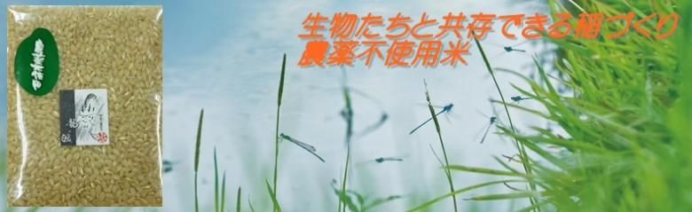 無農薬古々米(HP用)